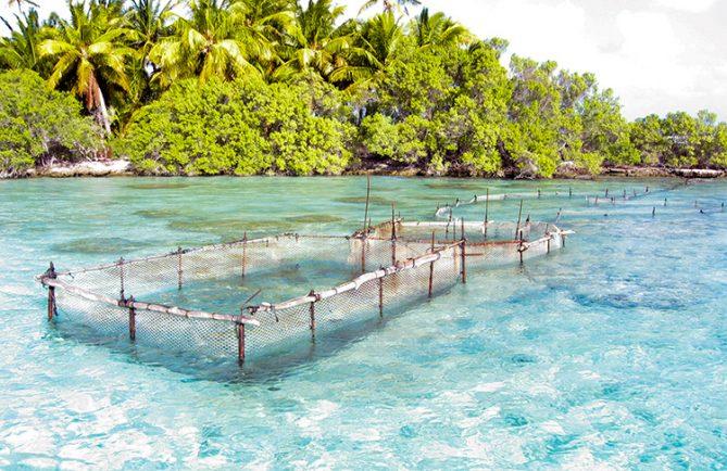 Parc à poisson de la passe Fainukea à l'est de l'atoll de Aratika.
