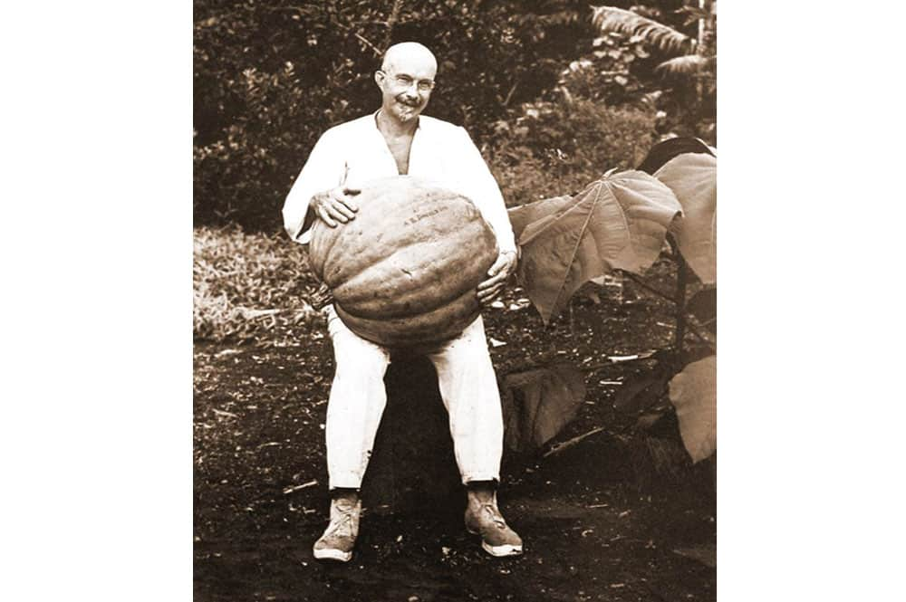 Harrison W Smith, en avril 1928 avec une citrouille de 34,8 kg. Photo Musée Norman Hall
