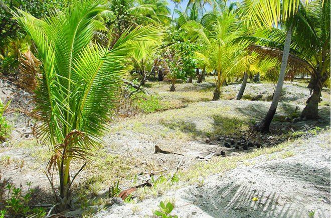 Anaa-fosse à culture, maite-Tahiti Heritage