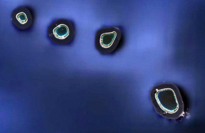 Les quatre atolls du groupe Acteon, archipel des Gambier