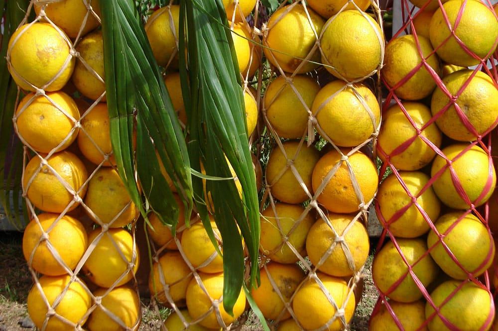 Glanes d'oranges du plateau Tamanu