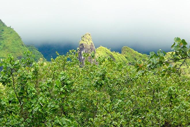 Chenille de la vallée de Papenoo
