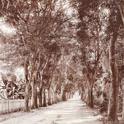 Rue de l'ouest à Papeete en 1900