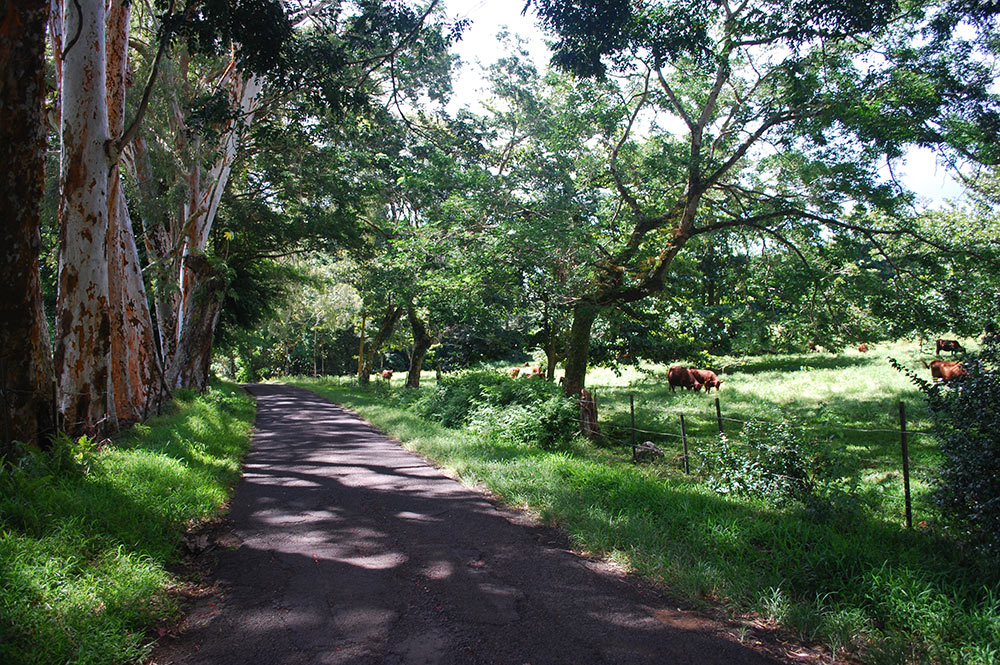Route du plateau de Taravao, Tahiti