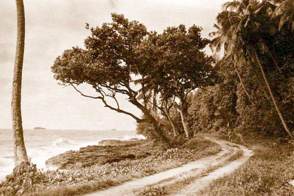 La route de ceinture avant le trou du souffleur Arahoho, à Tiarei, Tahiti en 1936. Photo W. Crake