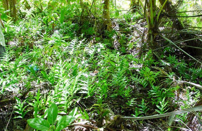 Fosses à culture du motu Turehareha - Tikehau