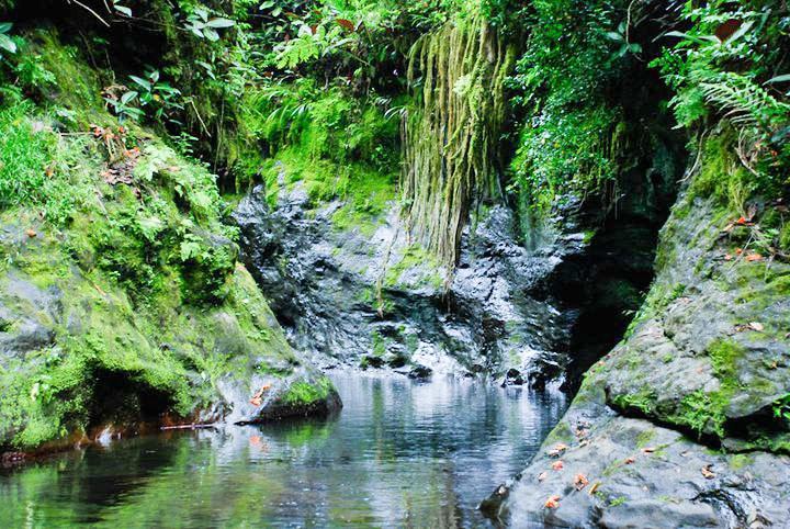 La rivière Fautaua . Photo Guy Tchong - Photowalk 2012