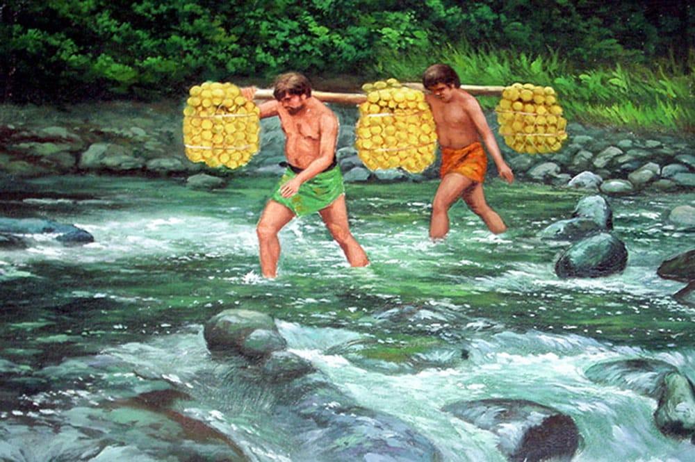 Cueillette des oranges de la Punaruu. Coll. Mairie de Punaauia