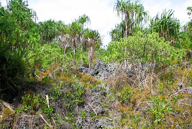 Zone de feo sur l'atoll de Niau au Tuamotu.