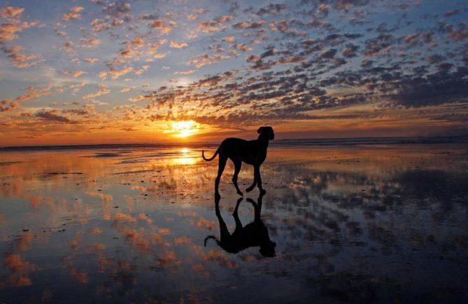 Piihoro, le chien protecteur des Teva