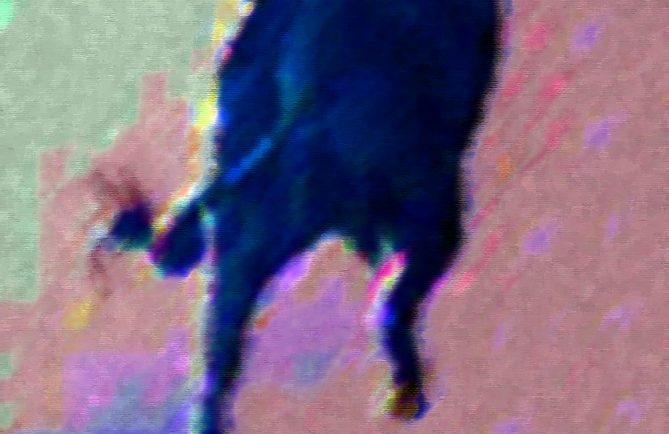 L'homme aux pieds de taureau, dans un flou éthylique