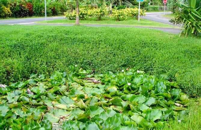 Source du lac Fauna Nui, à Huahine