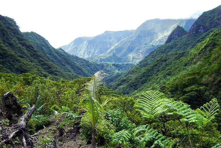 Vallée Te Faaiti, vallée de Papenoo. Diren
