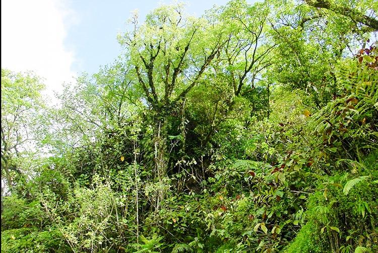 Tombe de la fille de Raa, haute vallée de la Papenoo