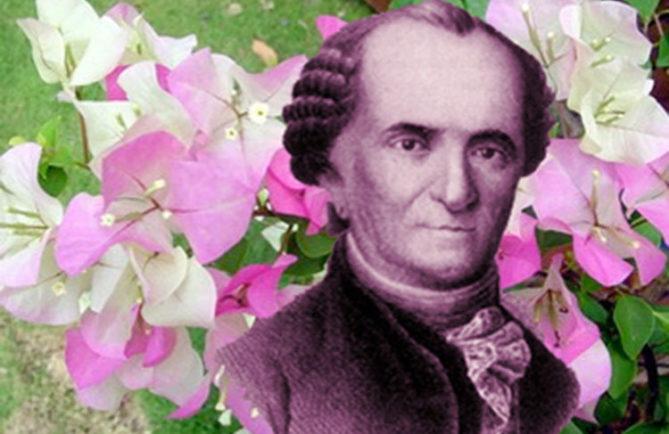 Le botaniste Commerson et le bougainvillier