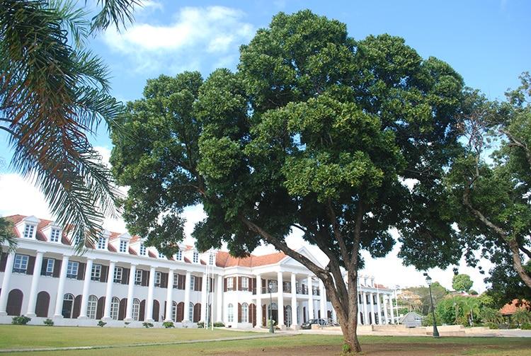 Marumaru, Arbre des avenues du jardin de la mairie de Pirae © Tahiti Heritage