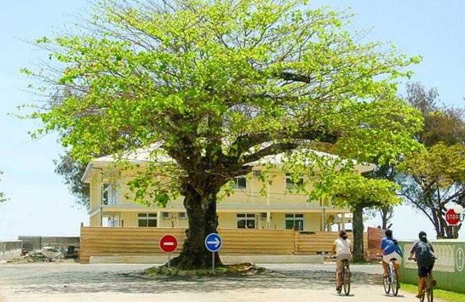 Autera'a du rond point de la mairie de Tubuai