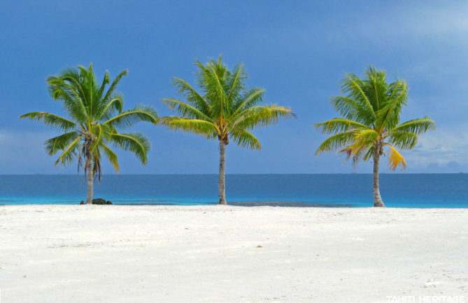 Trois cocotiers verts sur le sable blanc et le lagon bleu Photo Olivier Babin