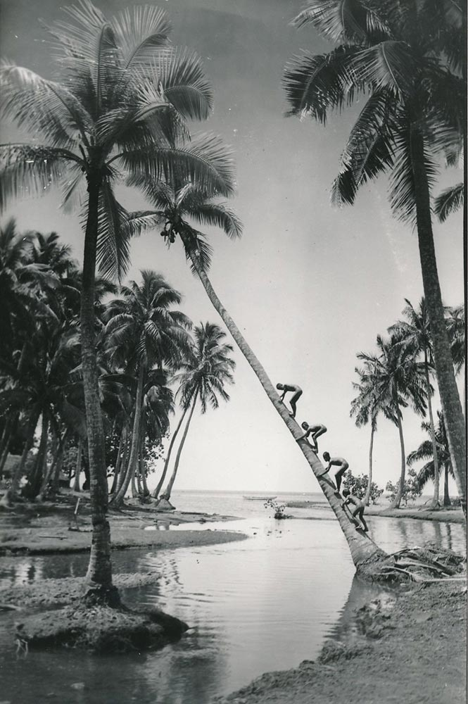 Enfants grimpant au cocotier. Tahiti 1940 Photo Paul-Isaac-Nordmann