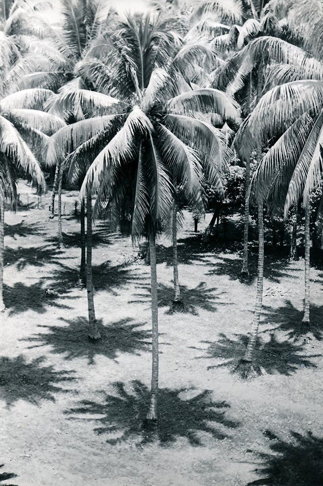 Ombres de cocotiers indiquant midi. Tahiti 1940 Photo Paul-Isaac-Nordmann