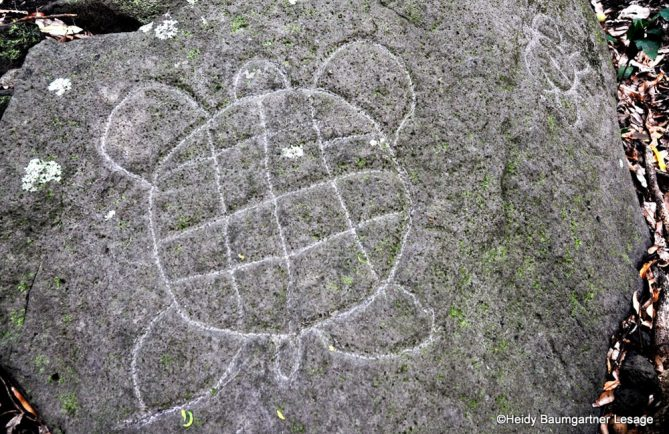 Pétroglyphe de tortue dans la vallée Haranae à Maupiti. Photo Heidy Baumgartner Lesage