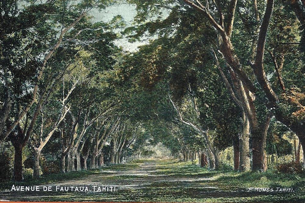 L'avenue de la Fautaua à Papeete en 1905. Photo F. Holmes