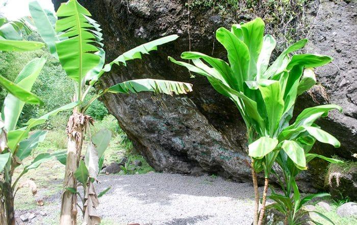 Abri Apaapauai de Farehape, vallée de la Papenoo