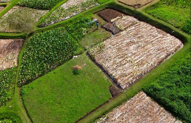 Tarodière d'Avera à Rurutu photographiée par cerf-volant. Photo Pierre Lesage