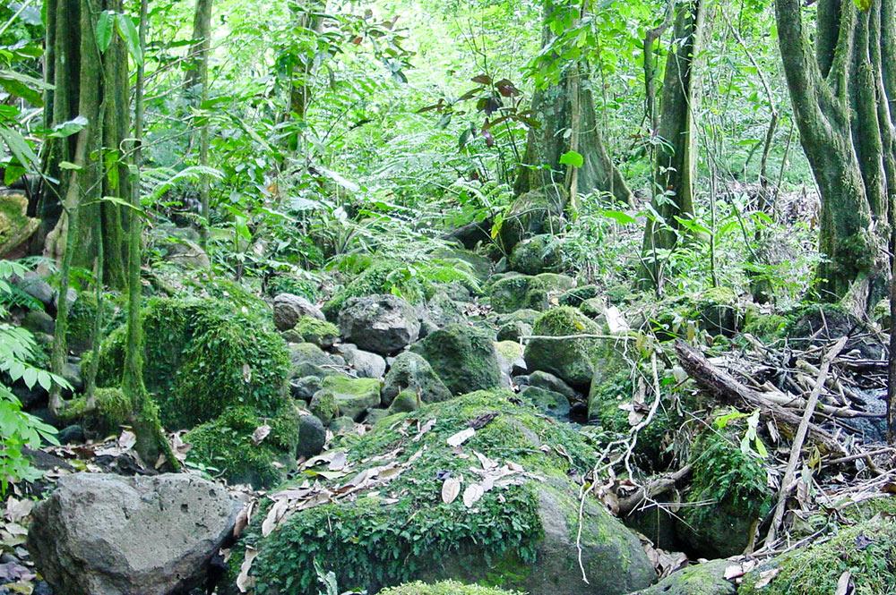 Marae de la vallée de Vaipu à Papara © Tahiti Heritage