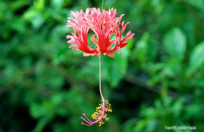 Fleurs De Tahiti Tahiti Heritage