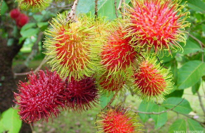 Ramboutan de Tahiti - Nephelium lappaceum. © Tahiti Heritage