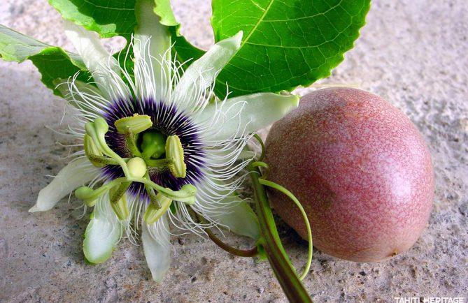 Fruits de tahiti tahiti heritage - Passiflore fruit de la passion ...