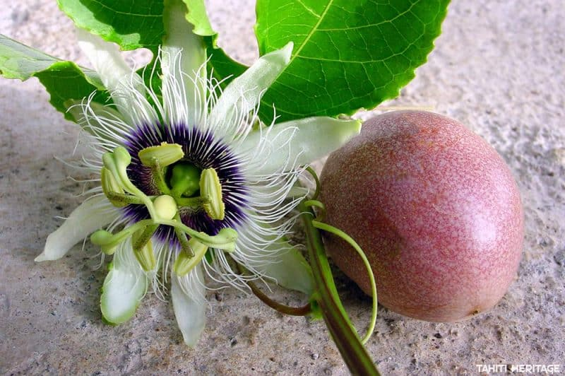 Fruit de la passion. © Tahiti Heritage