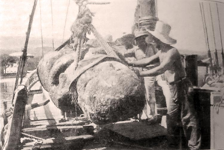 Débarquement à Papeete des tiki de Raivavae en janvier 1934 - L'illustation