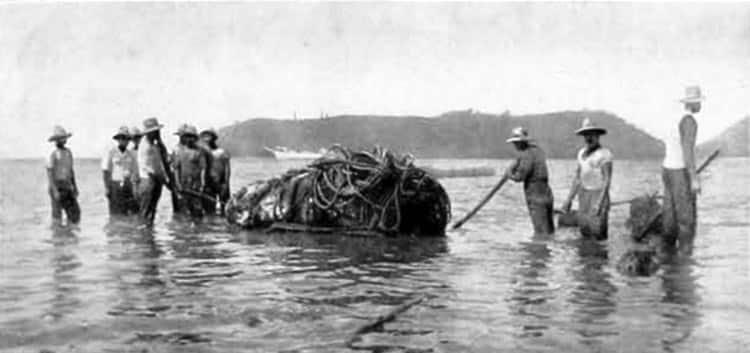 Embarquement des tikis à Raivavae en janvier 1934. Photo l'Illustration