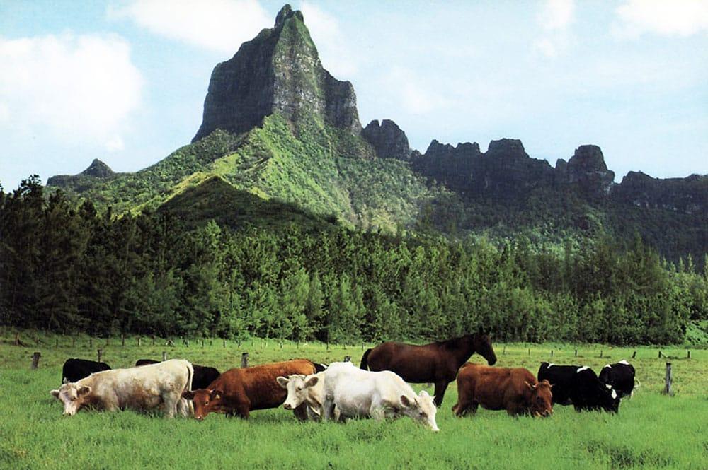 Domaine d'Opunohu et mont Moua roa à Moorea