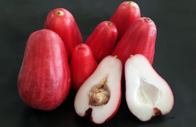 Ahia, Jamerose yzygium malaccense. Photo Chantal Tahiti