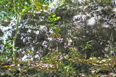 Entrée de la grotte Pare, vallée de la Naohata à Pirae