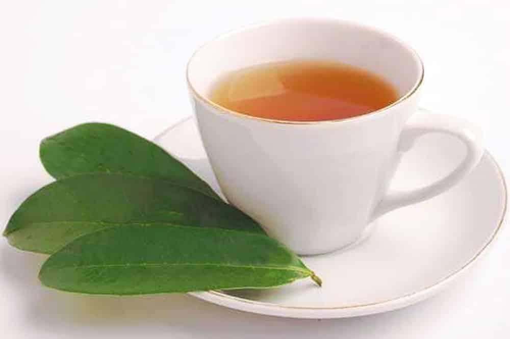 Thé de feuilles de corossol