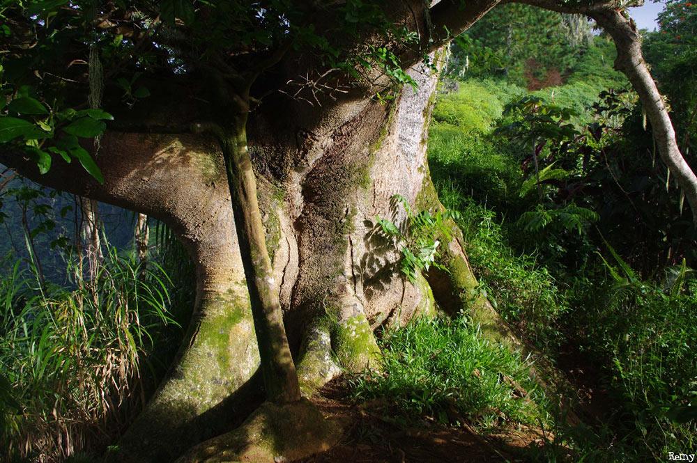 Pied du Falcata du chemin de l'Aorai. Photo Rémy Canavesio