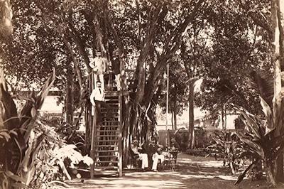 cat-arbres-notables