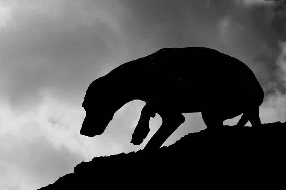 Silhouette de chien en contre-jour