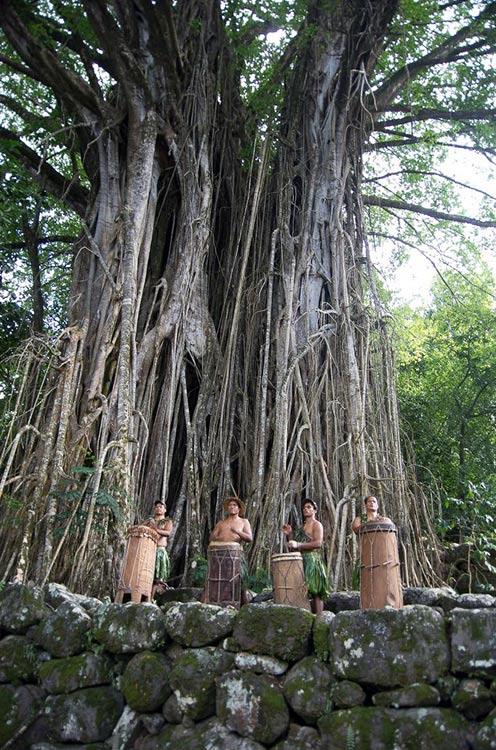 Banian sacré de Hatiheu, nuku Hiva. Photo Yan Peirsegaele