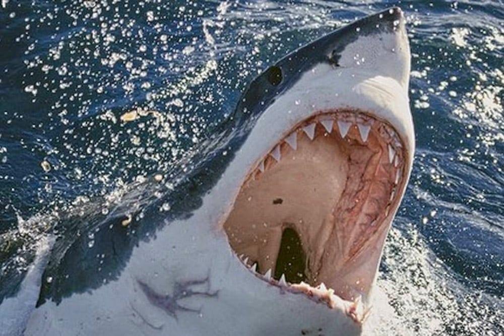 Gueule de requin