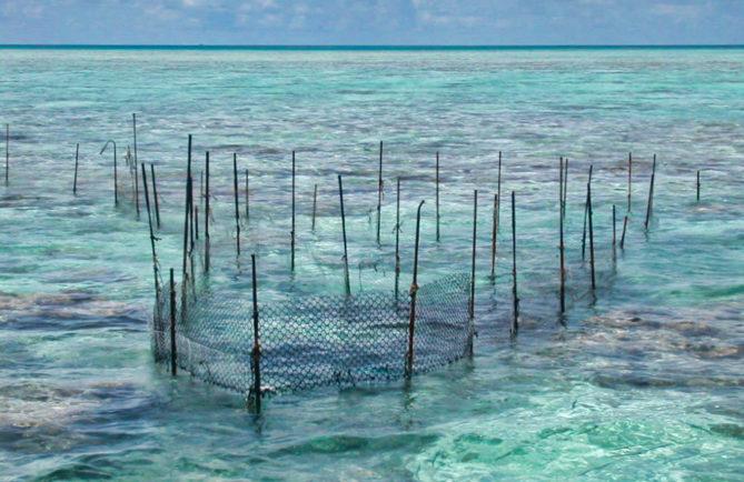 Parc à poisson de l'atoll de Toau (Tuamotu) 2004